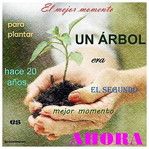 cita-plantar-arbol