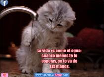 imagenes-de-gatos-con-frases-de-la-vida-para-facebook - copia
