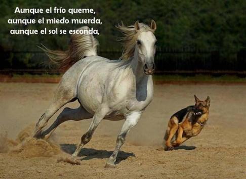 frase-caballo-corriendo